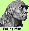 Peking man